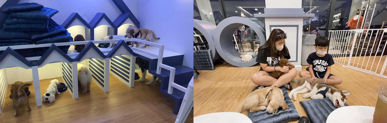 Doggo Café - ឆ្កែកាហ្វេ by dog lovers