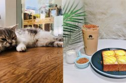 ញ៉ាំភេសជ្ជៈលេងជាមួយឆ្មាក្នុងឱកាសប្រូម៉ូសិនពិសេសពី Cat U House